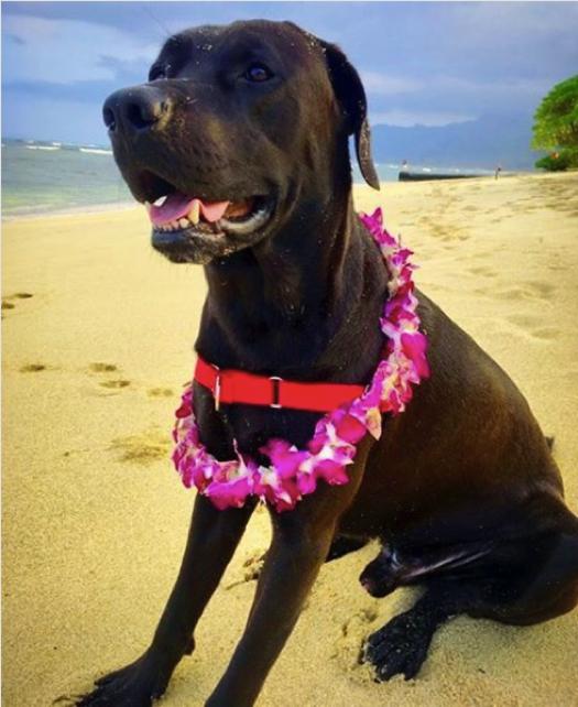 Cute dog on the beach