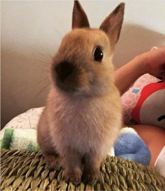 Cute, happy bunny